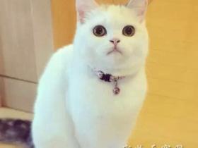 别人家的猫咪 有没有萌到你
