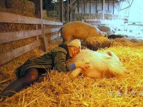 让牛马猪安度晚年的动物养老院
