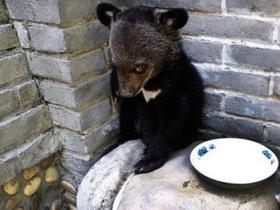 """西安男子生日当天,一不小心在秦岭捡到""""熊孩子"""""""