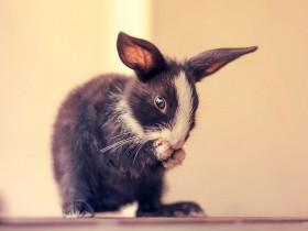 摄影师用照片记录:刚出生的兔子长大的过程