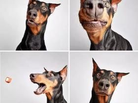 流浪狗狗的艺术照 帮它们找到一个幸福的家