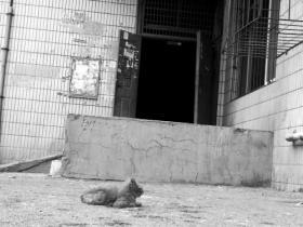 老人母亲节触电身亡 生前喂养流浪猫12年