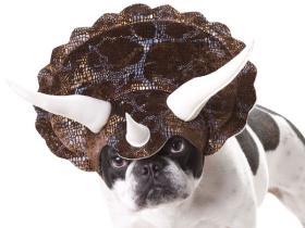 给你的狗狗穿上三角恐龙服装使它变身恐龙