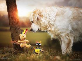 购买金毛犬时需要注意的问题和五个选购技巧