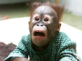 动物们被吓出翔时,摄像师拍下了它们的表情(一)