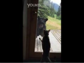 猫咪VS黑熊:野生黑熊入侵遇到守家的猫