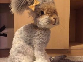 兔子的兔脚皮炎和乳房炎怎么防治