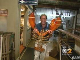 纽约长岛现百岁大龙虾