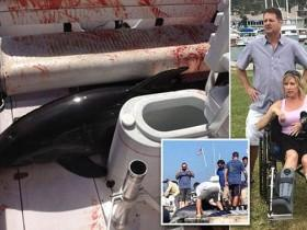 海豚跳上船压断妻子双脚 丈夫将它送回海里
