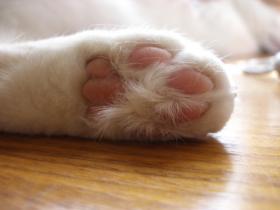 专辑:猫咪的小爪子 也非常可爱