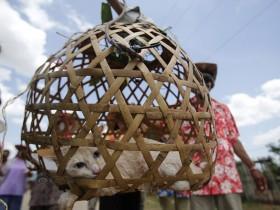 泰国遇10年大旱 村民抬猫求雨