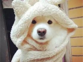 无论心情多糟糕 狗狗都会满怀期待地迎接你