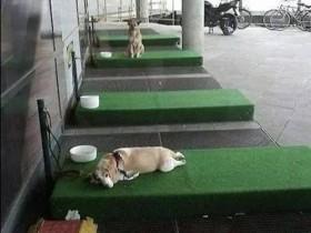 """德国商场创建""""停狗位"""" 不仅有草坪躺还有水喝"""