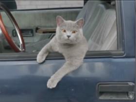 主人和猫咪的模仿秀 猫咪的表情超期到位