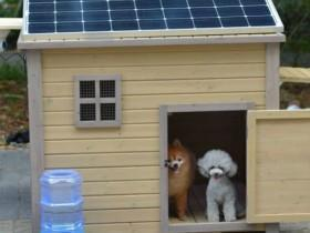 男子为狗狗做了一个公寓 让所有狗狗都眼馋