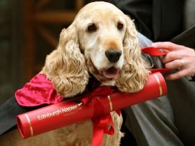 """英国大学生带着穿""""情侣装""""的狗狗 参加大学毕业典礼"""