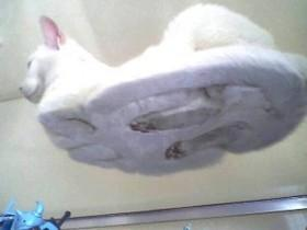 22个养猫咪要买玻璃桌的原因
