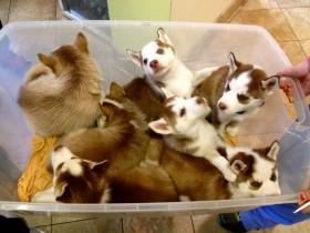 心情不好的时候,可以看一下这14篮子小狗崽