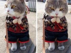 这只猫咪仿佛在计划做一件邪恶的事情