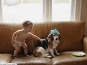 《小男孩的狗狗去世了》里的评论 分享网友们的声音
