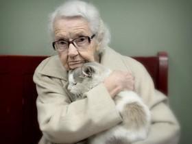 领养代替购买:国外网友领养的中老年流浪猫