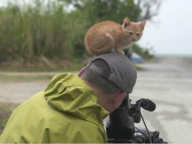 小奶猫捕获日本摄影师的心