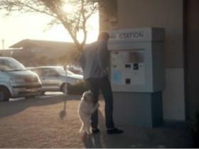 不到最后绝对猜不到是什么广告 主演是一只狗狗