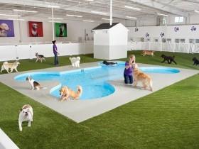 肯尼迪机场开放世界第一个宠物航站楼 豪华程度让人震惊