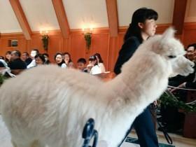 神兽在日本登上婚礼殿堂:见证新人的幸福