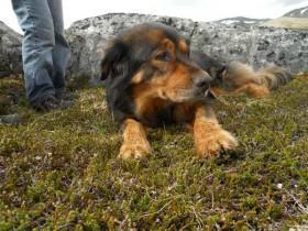 16岁狗狗在主人遇到危险时挺身而出 看到最后泪流满面