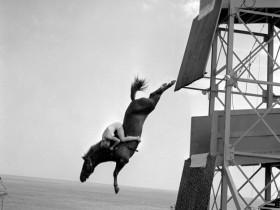 1943-1969年的珍贵老照片:骑马跳水运动