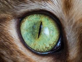 15张猫咪眼睛的近距离照片 给人一种超惊艳的感觉