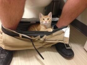 猫咪最喜欢做的事情是:当主人脱下内裤后(15张)