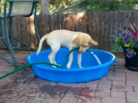 狗狗自己叼水管注水洗澡