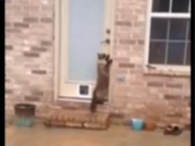 会自己开门的猫咪