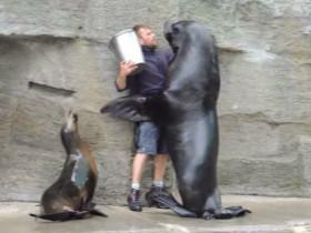 """饲养员帅哥被海狮""""霸气壁咚"""""""