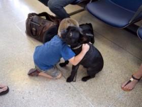 当主人要出远门的时候 宠物的内心是无比伤感的