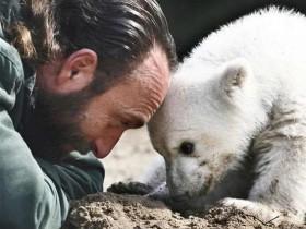 """明星北极熊""""克努特""""的死因查明 它短暂又坎坷的一生令人心疼"""