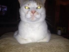 千万别惹猫 尤其是在它们眼里有杀气的时候