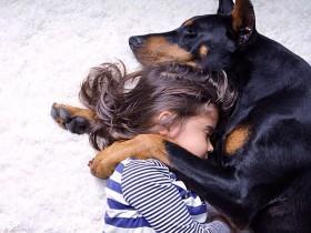 杜宾犬的身体护理和美容护理