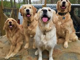 16张让人心情愉悦的照片 爱笑的狗狗才是最幸福的汪