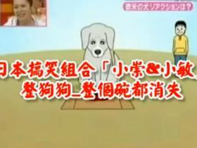 整狗的节目:碗不见了