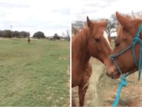 """看马儿如何追""""女朋友"""""""