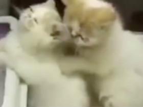 秀恩爱的两只猫咪