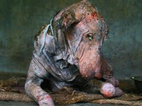 流浪狗被救后发生惊人变化