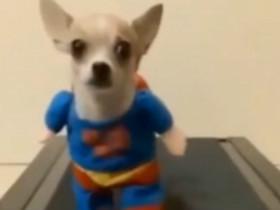 动物的搞笑视频合集