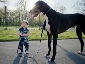 牵引绳不是对自由的束缚,而是对狗狗生命安全的保障