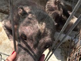 英国明星转发一条微博 救了650只流浪狗的性命