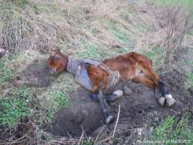 一匹饿得皮包骨头的马 最后发生不可思议的蜕变