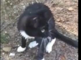 猫咪做了一件让所有人都惊讶的事情